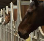 Pension chevaux - Boxes chevaux à louer