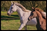 pension prairie - Dilbeek