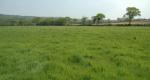 Recherche prairie à louer